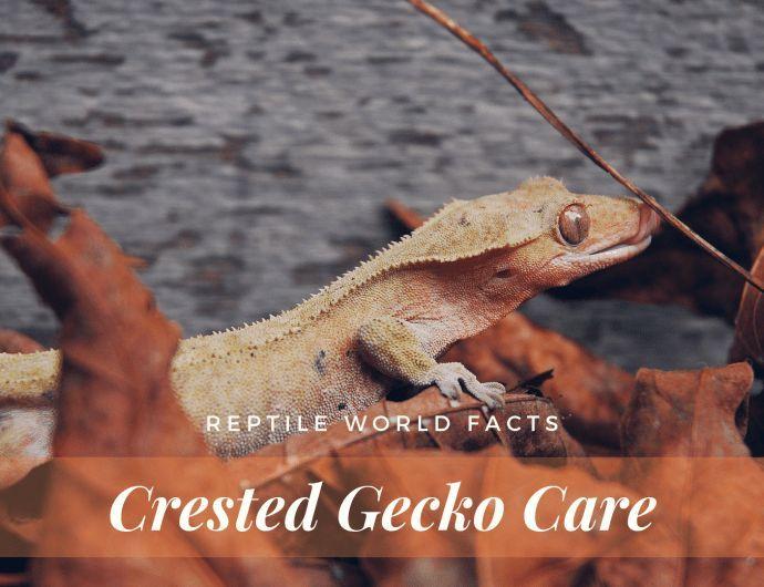 Leopard Geckos Memes Amphibians #leopardgeckos
