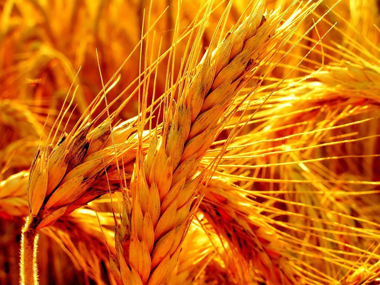 orange oats grain color photography Orange
