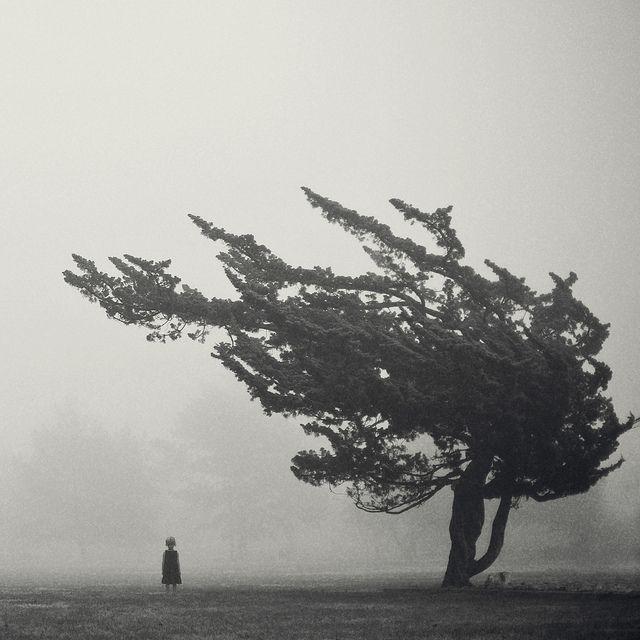 Mittaa tarkkaan kahden puun välinen etäisyys, kuuntele niiden keskustelua, niin hiljaista: ne puhuvat tulevaisuuden epävarmoista tuulista. Arvoituksellista on yhä kaikki. Entä ihmiset? He eivät ole täyteen mittaansa vielä kasvaneet. -Bo Carpelan-