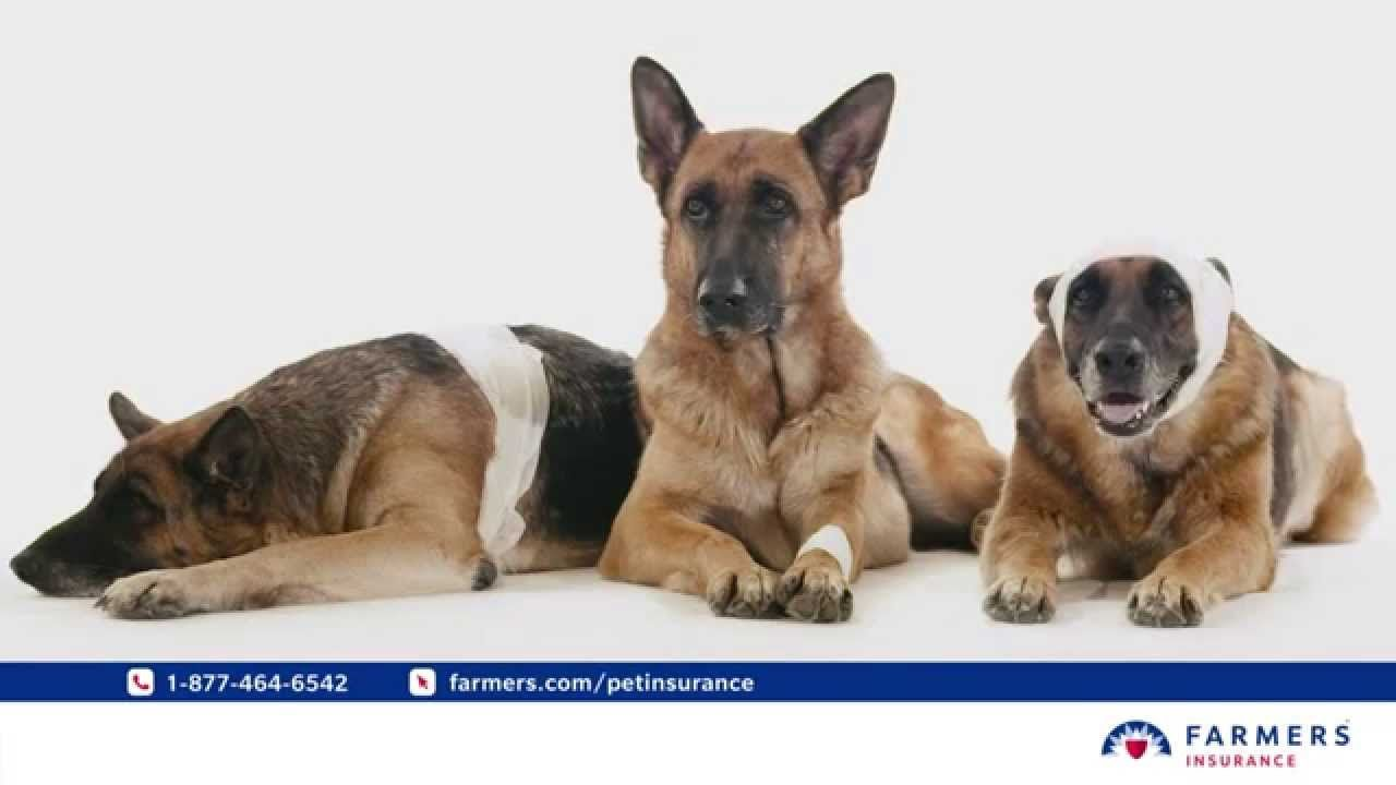 Farmers pet insurance street smarts dog care feline