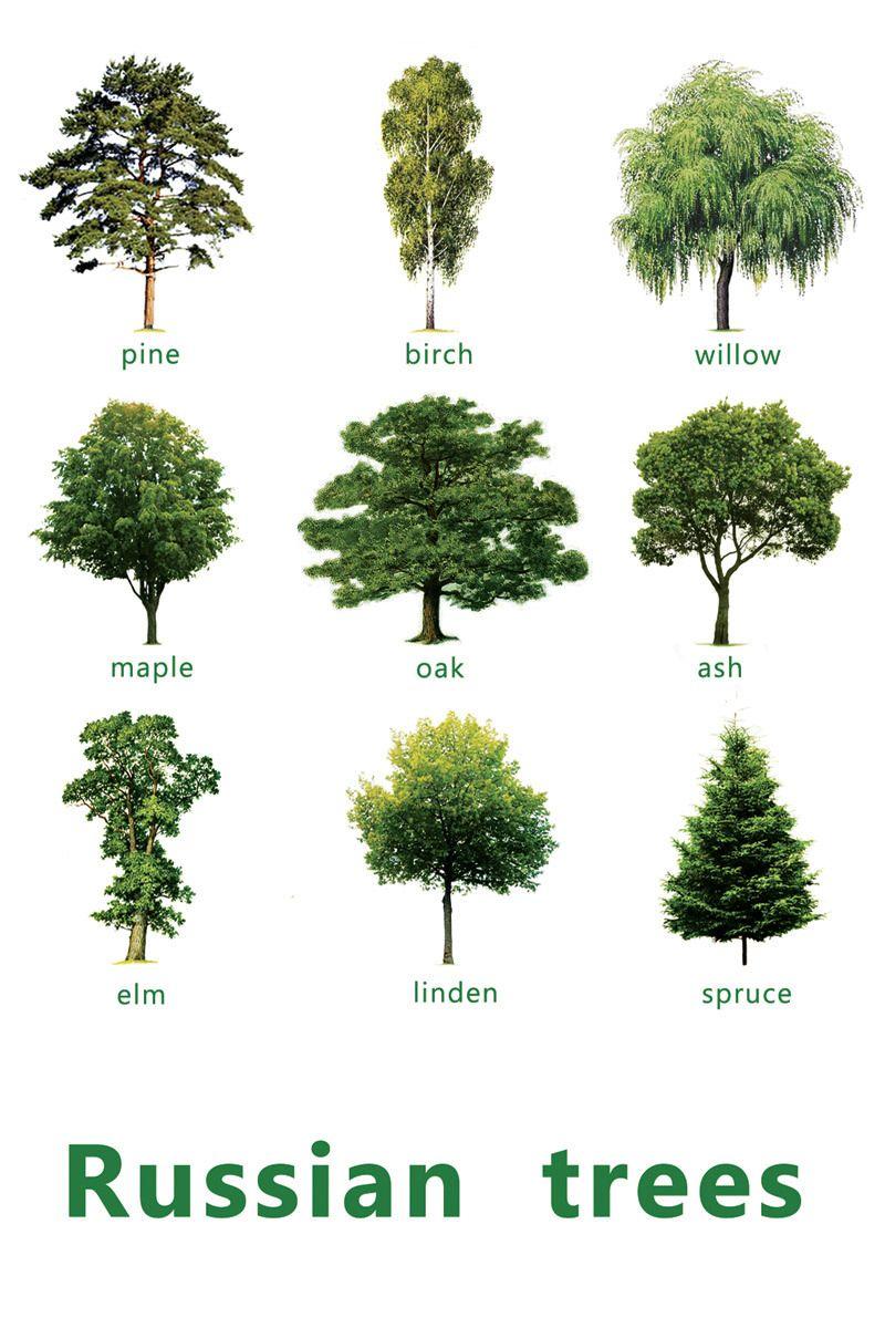 деревья в картинках на английскому мотостроения начала