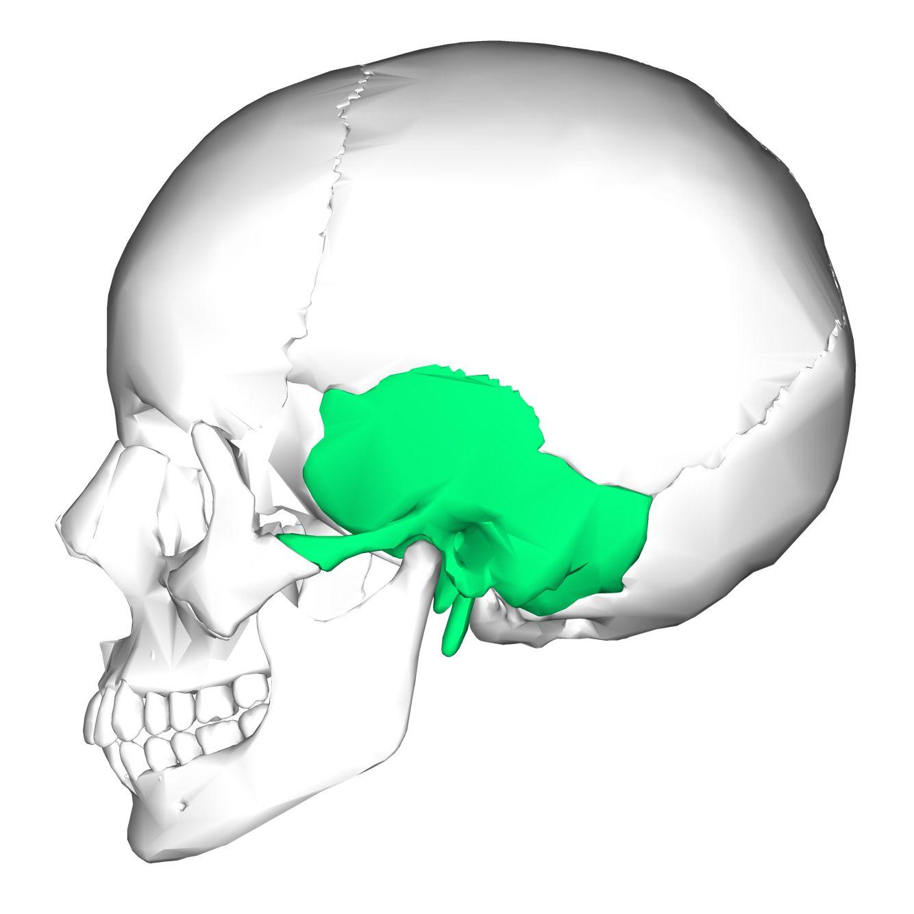 temporal bone : 2 bones , these bones with sphenoid bone make part, Sphenoid