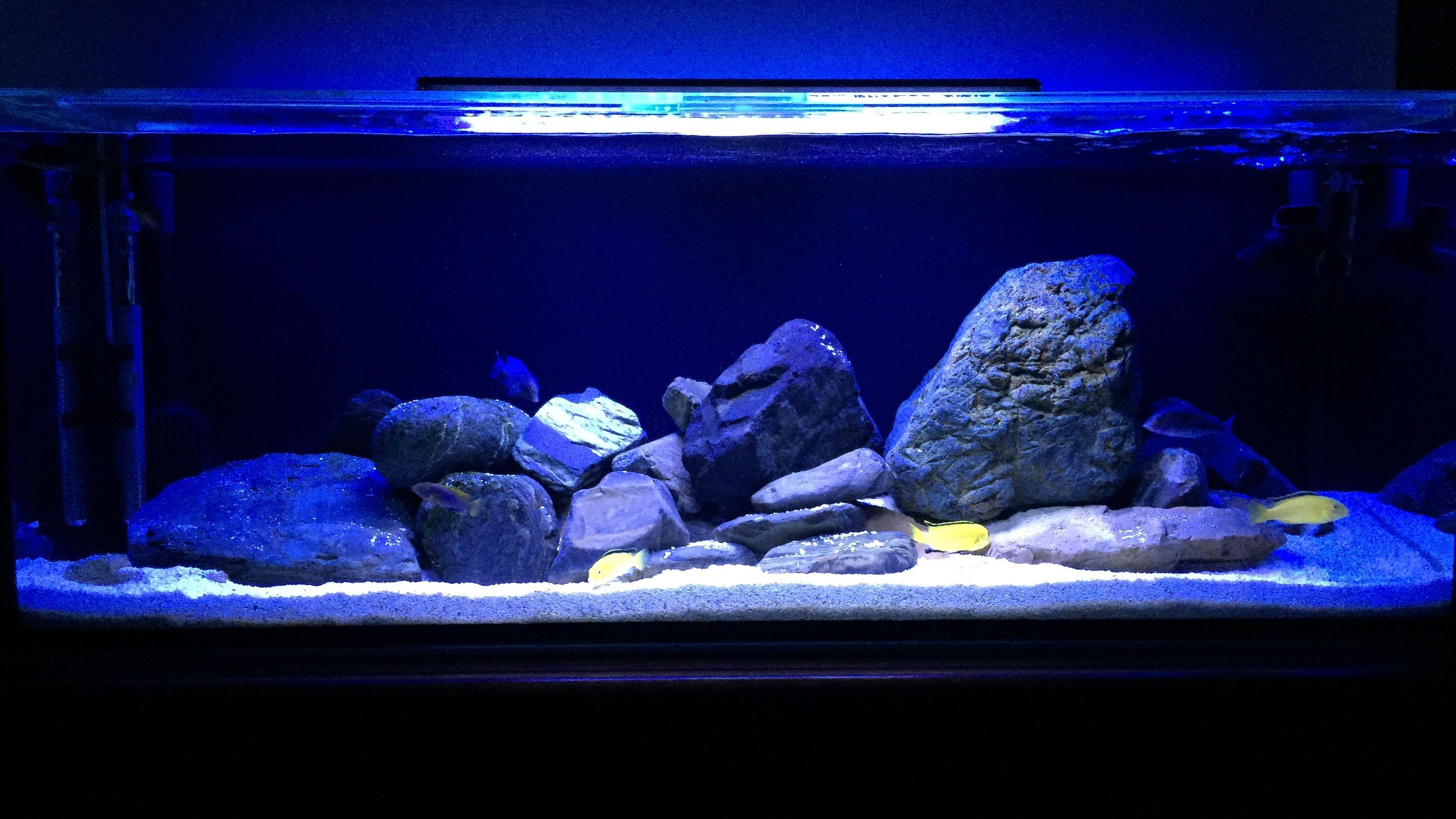 02370da52a239c7b3a3e75f6792532fa Frais De Aquarium Tropical Schème