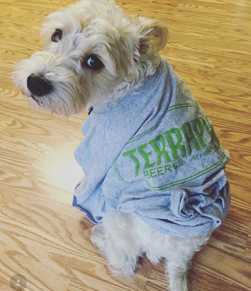 It's #nationalpuppyday and we just couldn't resist. #beermerch #puppiesofinstagram #terrapinbeerco #my_athens #GAbeer : @chatwithleahk