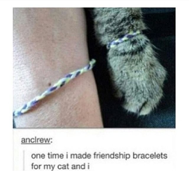 I want to make friendship bracelets for my cats now Hahahaha