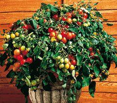 un potager urbain m me en ville nous pouvons nous r galer de tomates fraises et plantes. Black Bedroom Furniture Sets. Home Design Ideas