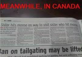 Image result for canadians vs moose