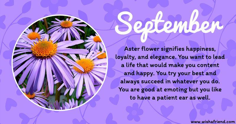 September Birth Flower September Flowers Birth Flowers September Birth Flower