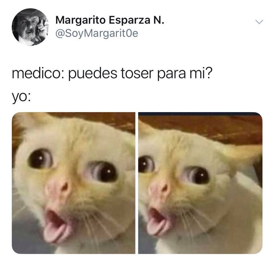 Pin De Derpnerd En Memes Memes Animales Memes Perros Meme Gato