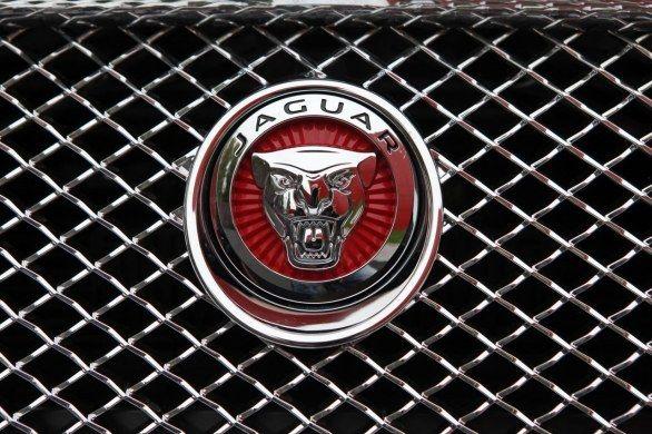 stemma jaguar | Stemma, Immagini