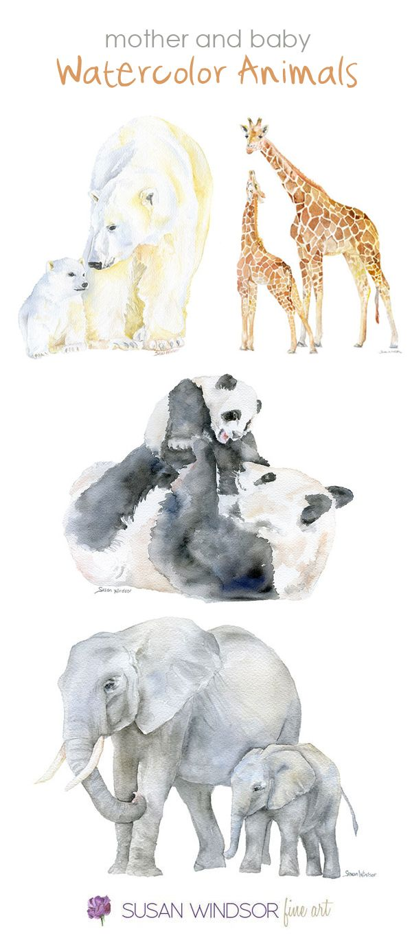 Watercolor Animals Mother And Baby By Susan Windsor