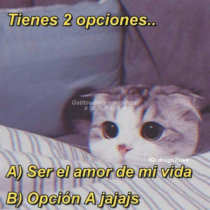 Pin De Maria Jose Galo Ventura En Love Memes Lindos Memes Espanol Graciosos Frases Gatos