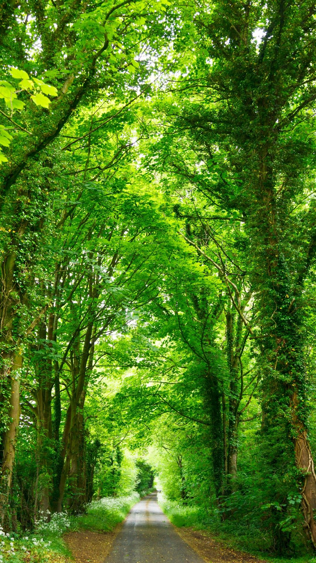 Deep Green Trees Phone Wallpaper Lockscreen Hd 4k Android Ios Nature Pictures Beautiful Landscapes Nature Images