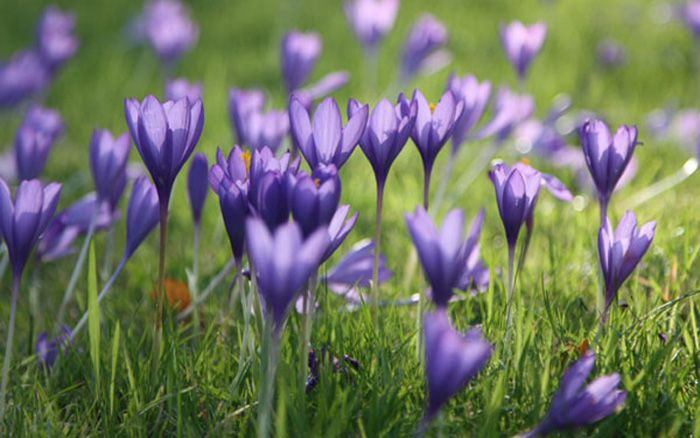 The 10 best early spring flowers for pollinating insects in the the 10 best early spring flowers for pollinating insects mightylinksfo