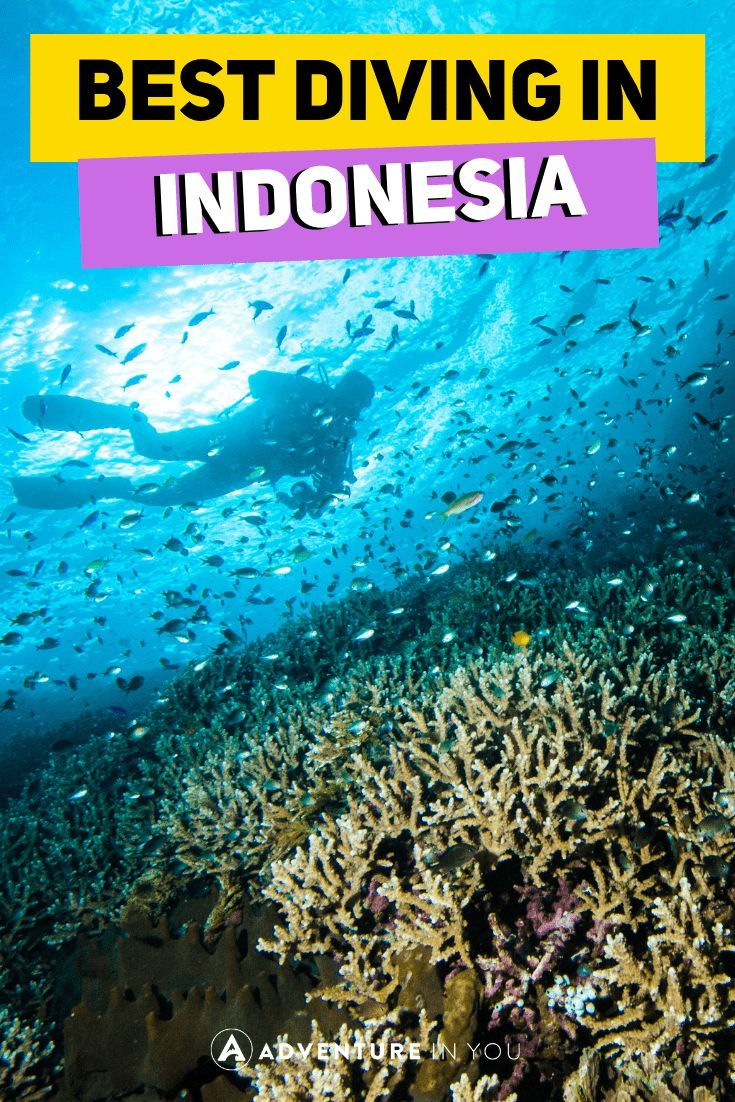 Scuba Diving in Indonesia | Looking for the best dive sites around the Island? Check out our complete guide on the best diving sites in Bali, Gili Islands, and more. #indonesia #bali #komodo