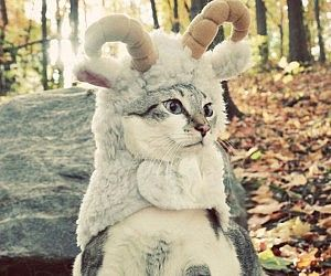 Gato disfrazado de oveja
