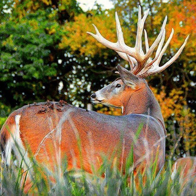 Pin by Amy Williams on Archery Hunting Archery, Hunting