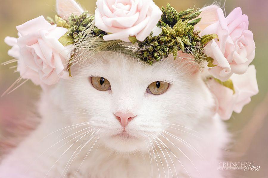 Картинка красивой белой кошки в цветах