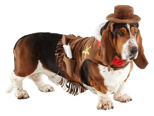 Pictures Of Cute Animals In Costumes Pet Costumes Cute Cats And