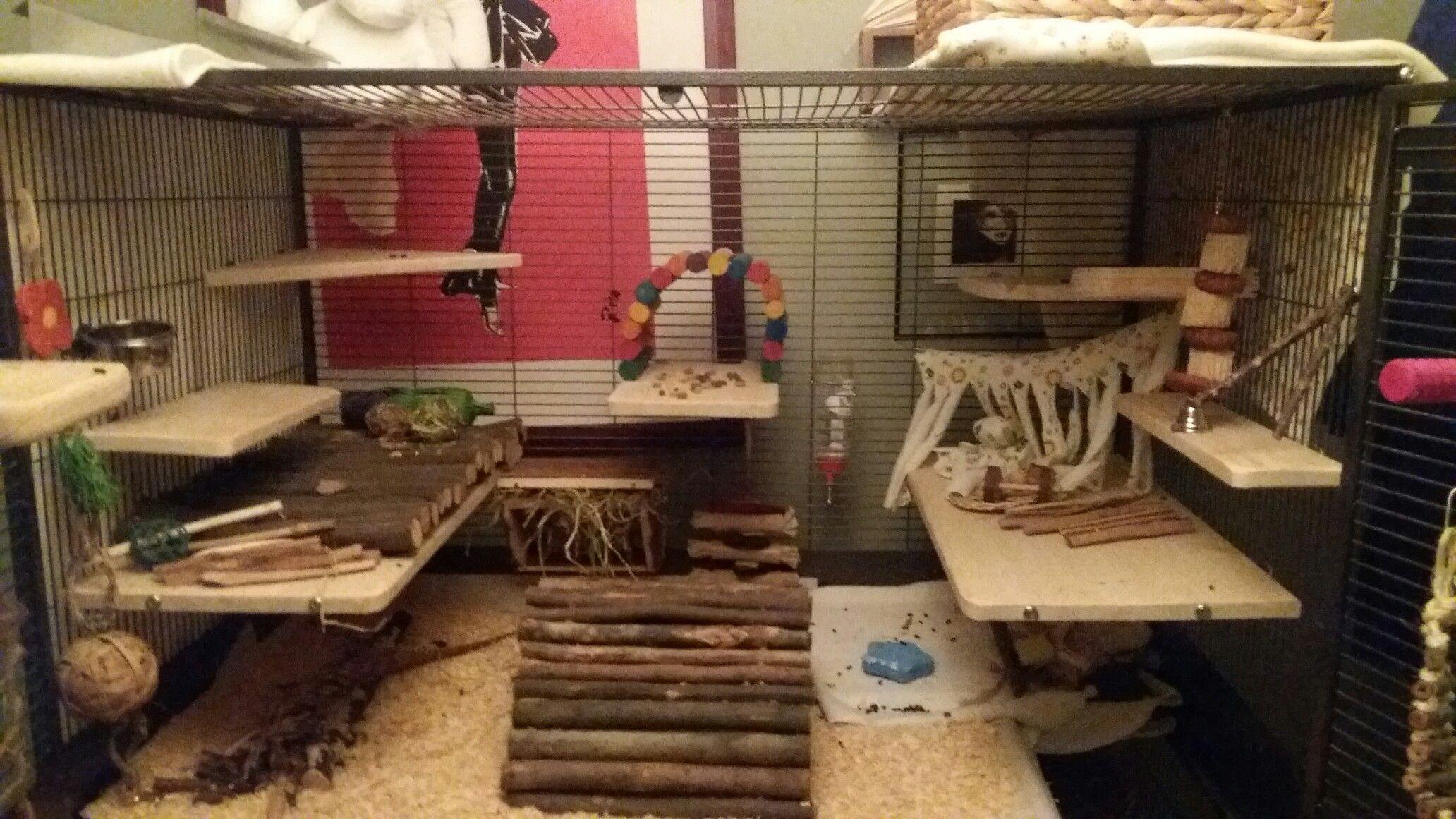 Top of chinchilla cage