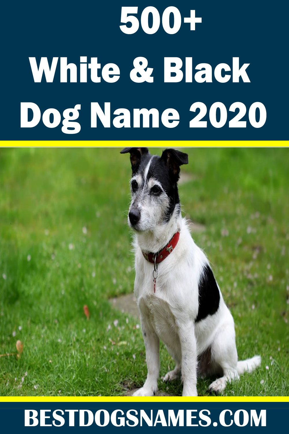 White Dog Names Should Be As Special As Your Cute White Dog Find