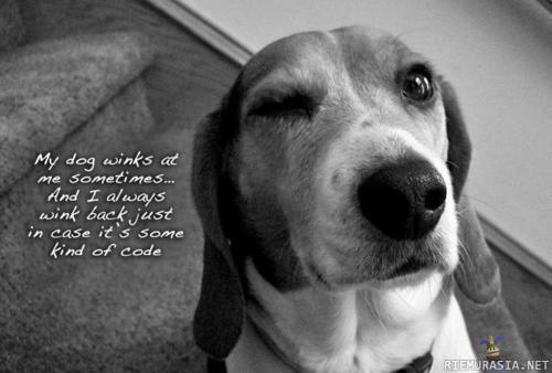 Dog Wink Love Beagles 3 Random D Funny Dog Pictures Funny