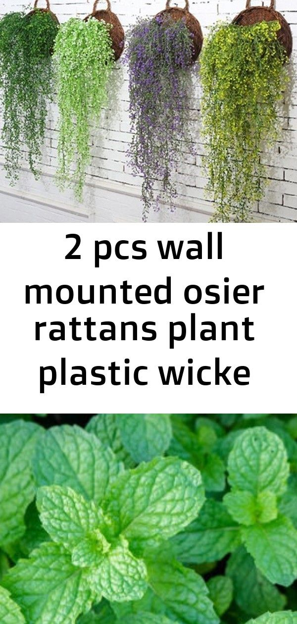 2 pcs wall mounted osier rattans plant plastic wicke bracketplant vine fake greenery for home arti 8 2 PCS Wall Mounted Osier Rattans Plant Plastic Wicke Bracketplant Vin...