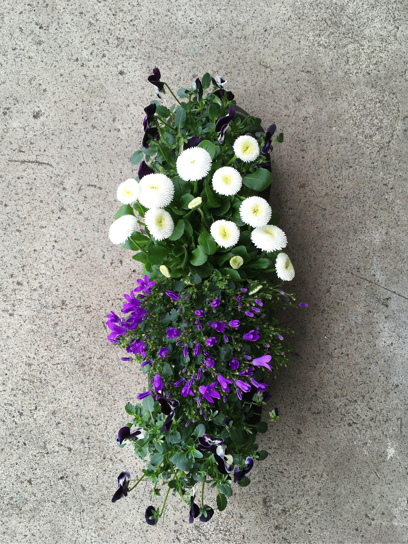 Fruhlingsblumen Pflanzen Fruhlingsblumen Balkon Pflanzen