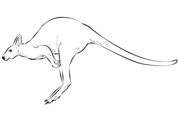 آموزش گام به گام نقاشی حیوانات کانگورو Art Humanoid Sketch