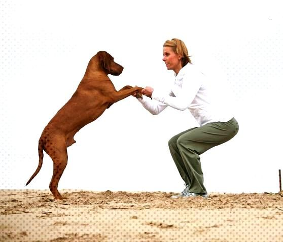 Squats - Fit with dog partner exercises - Dance with the dog! You go deep into the squat and keep