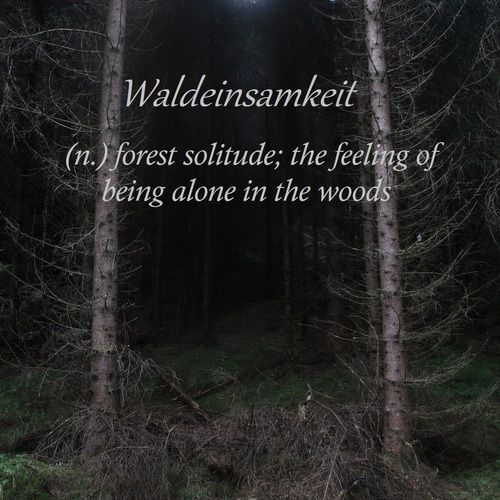 waldeinsamkeit german the feeling of being alone in the woods