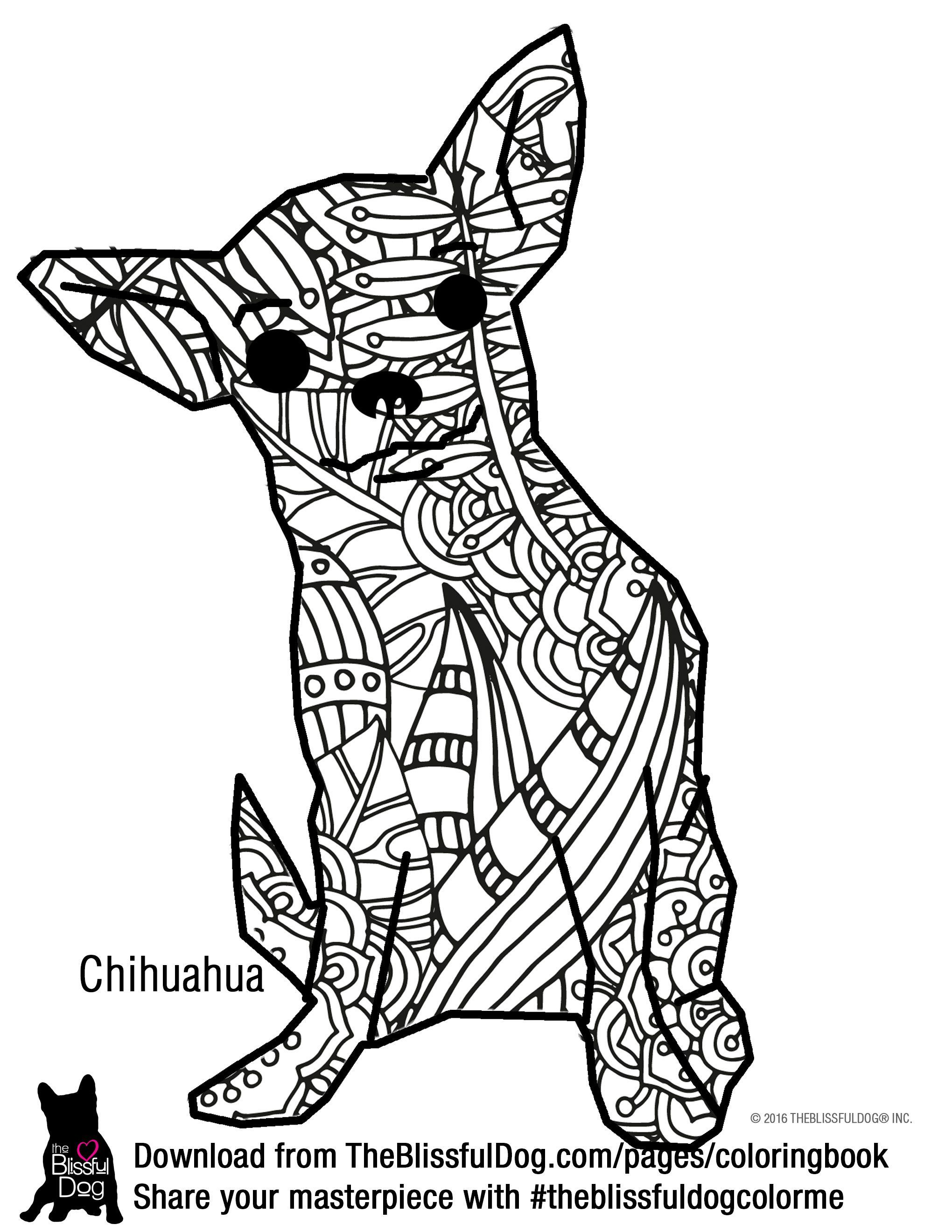 Color This Sassy Smooth Coat Chihuahua Big And Bold Download All