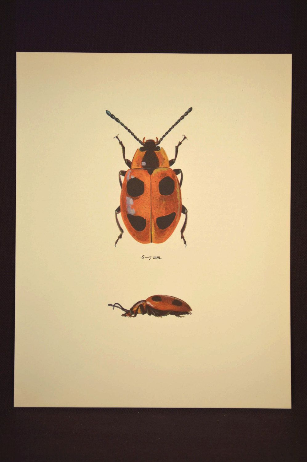 Insect Wall Decor Beetle Print Bug Decor Art Nature Vintage | Nature ...