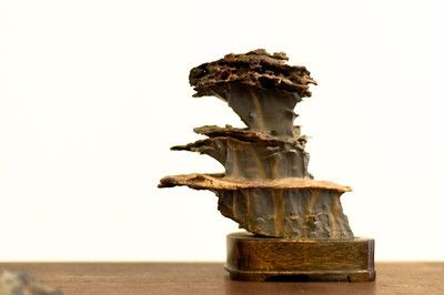 suiseki stones | San Francisco Suiseki Kai – 30th annual exhibit | Bonsai Tonight
