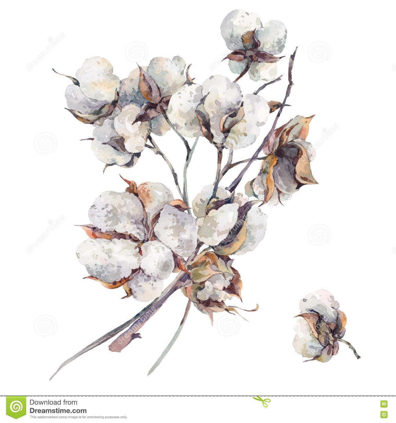Resultado De Imagen Para Algodon Pima Flores Flower Drawing Watercolor Bouquet Cotton Painting