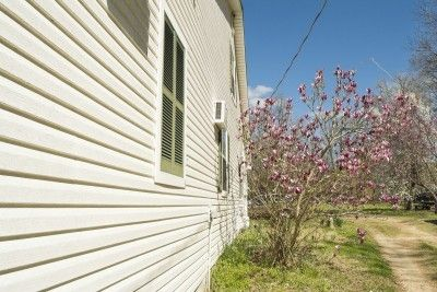 Magnolia Root System Are Magnolia Roots Invasive Magnolia Trees Landscaping Atlanta Magnolia
