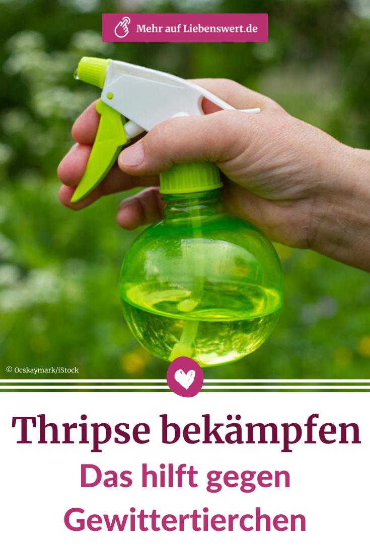 Thripse Bekampfen Das Hilft Gegen Gewittertierchen In 2020 Schadlinge Gewitter Pflanzen