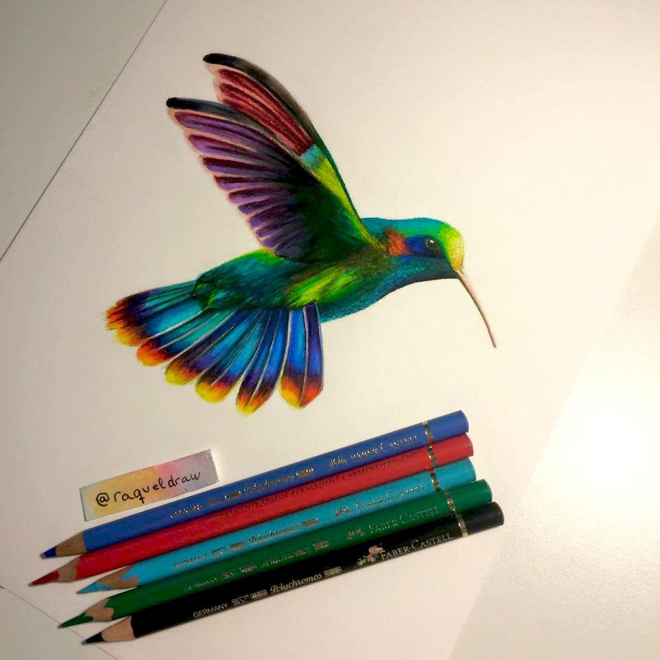 Colibri 2 Colibri Dibujo Dibujos Lapices De Colores Dibujos