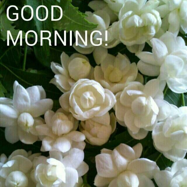 35 Trends For Jasmine Good Morning New Flowers Images Fourth Grade Flippe