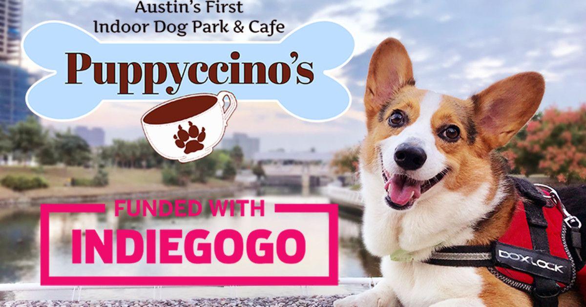 Austins first indoor dog park and cafe were bringing