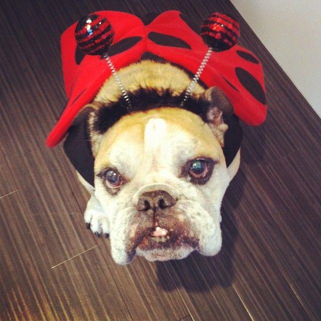 Happy Halloween from @PawshGeorge!! #vancouver #yaletown #halloween #Padgram