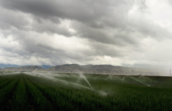 A farm field just outside Bakersfield is watered as a storm cloud gathers in Bakersfield, California, April 11, 2012.