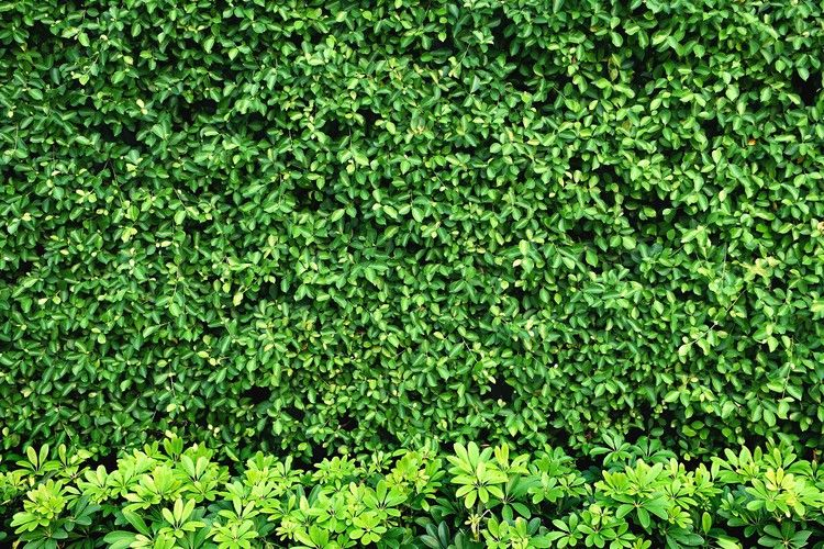 Living Walls are Becoming More Prominent in Urban Areas — hh2 Power Tools