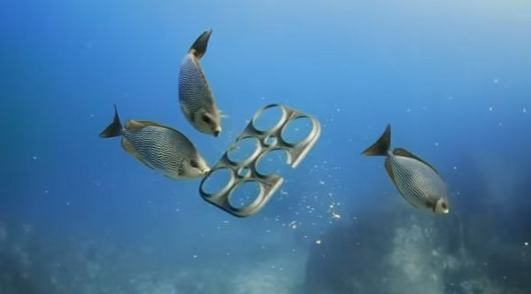 Florida Based Brewing Company Saltwater Brewery Has Created The First 100 Biodegradable And Edible P Biodegradable Products Reduce Plastic Waste Marine Life