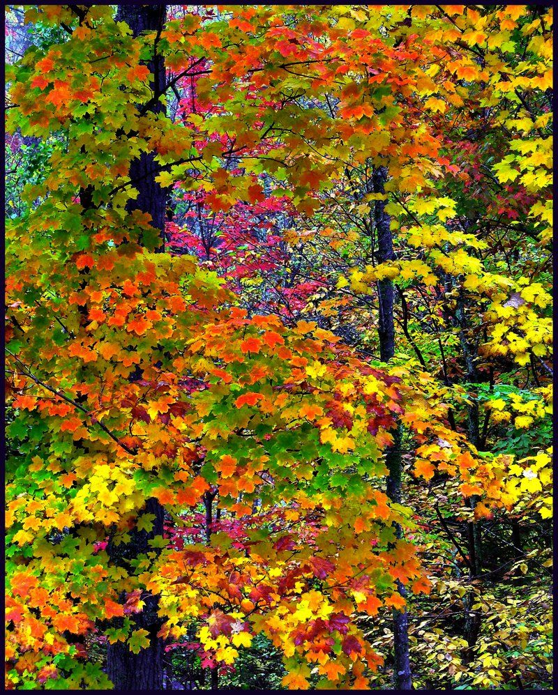 Gorgeous Nature Quilt Awesome Nature Autumn Scenes