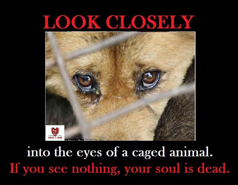 Inspiring Quotes Life Dreams Passion Animals Animalprotection Humane Animals Animal Rights Animal Abuse