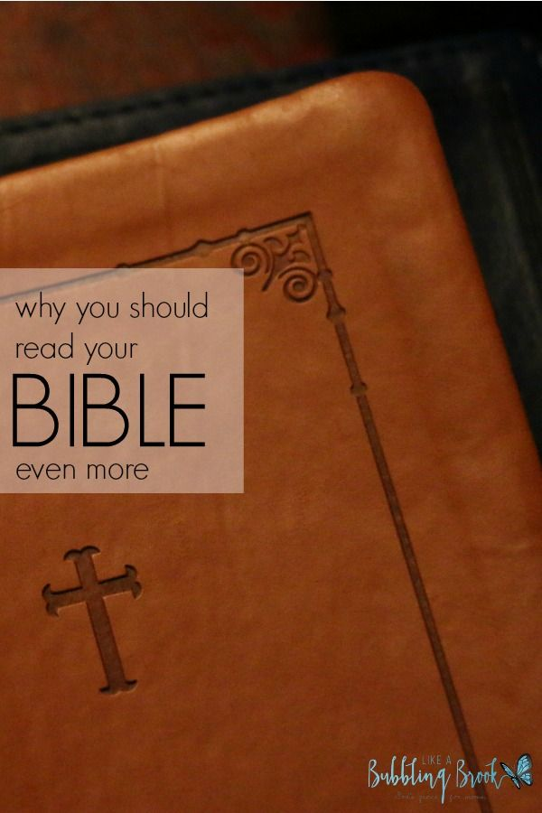 Which Book Of The Bible Should I Read. Facebook Official Message advanced provide articles webcast