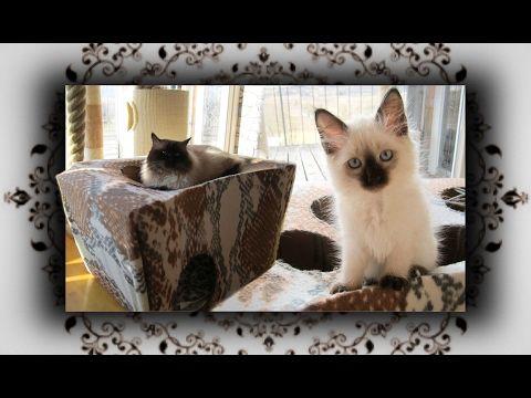 Diy Katzen Trampolin Spielhohle Aus Karton Teil 1 Cat Game Cave Youtube Katzen Katze Diy Katzen Beschaftigen