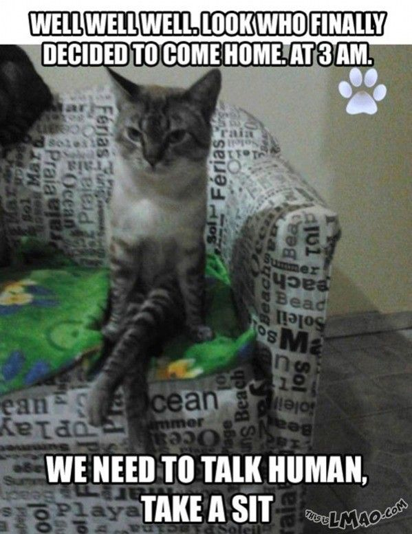 Funny animal pictures with captions cats human home late.
