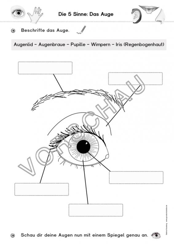 5 Sinne-Werkstatt | Sinne, Werkstatt und Grundschulen